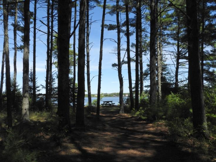 Beaubears Island pines