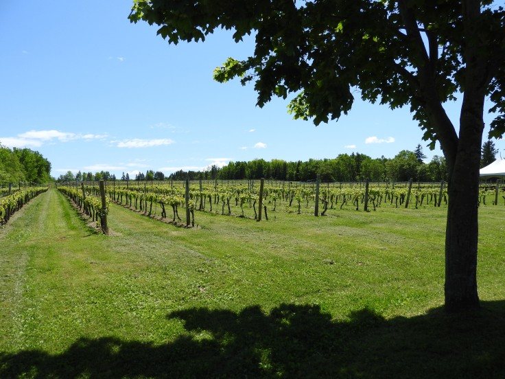 Jost winery vines