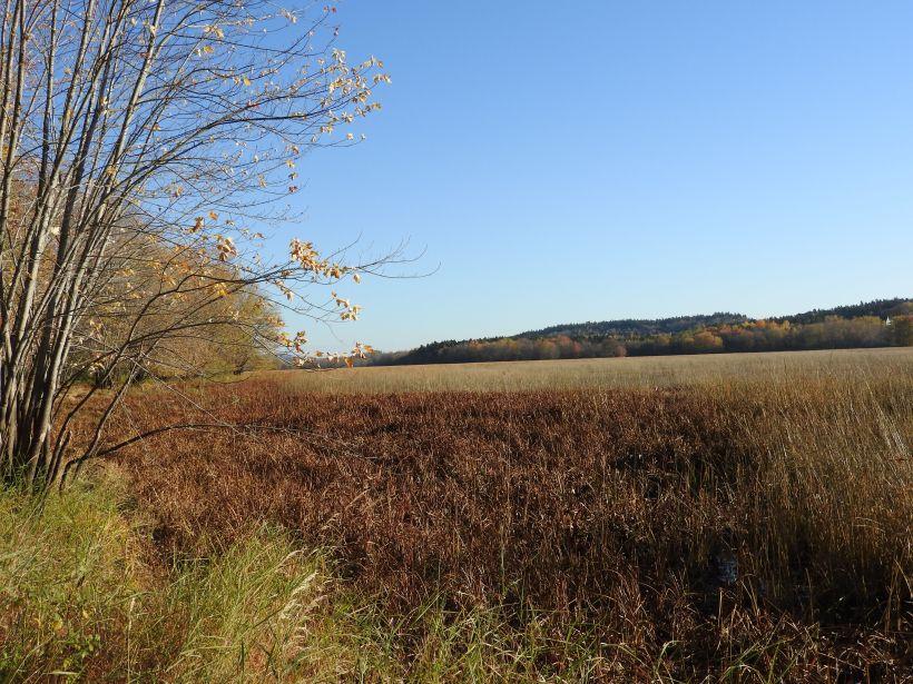 Pendersgrass Trail