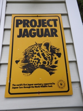Project Jaguar, The worlds first jaguar sanctuary support by Jaguar Cats throught the world wildlife Fund