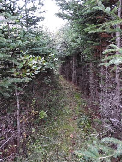 Trail through the woods from Farley Mowat's home in River Bourgeois, Cape Breton