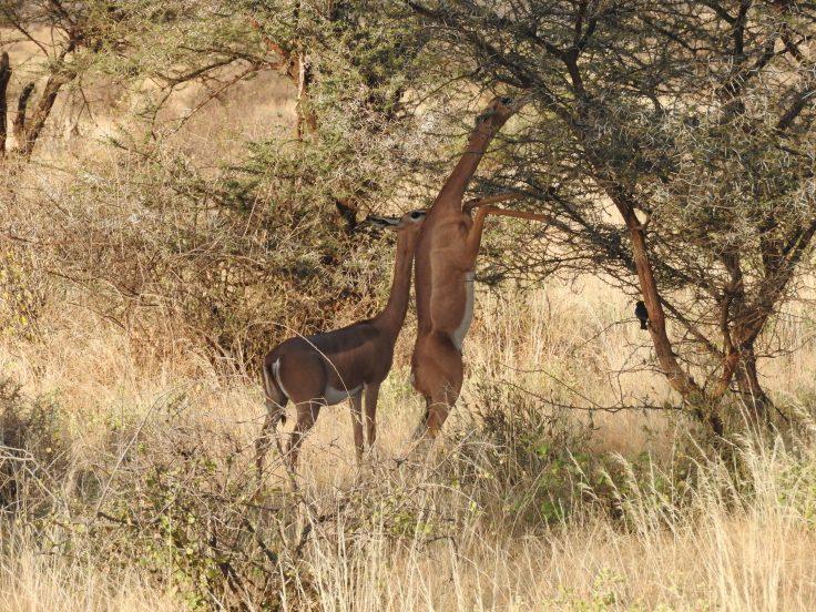 Kenya 2016 170.JPG