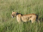 Kenya 2016 2005