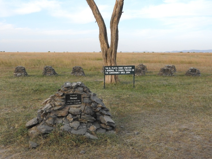 Cemetery of Rhinos pouched on the reserve