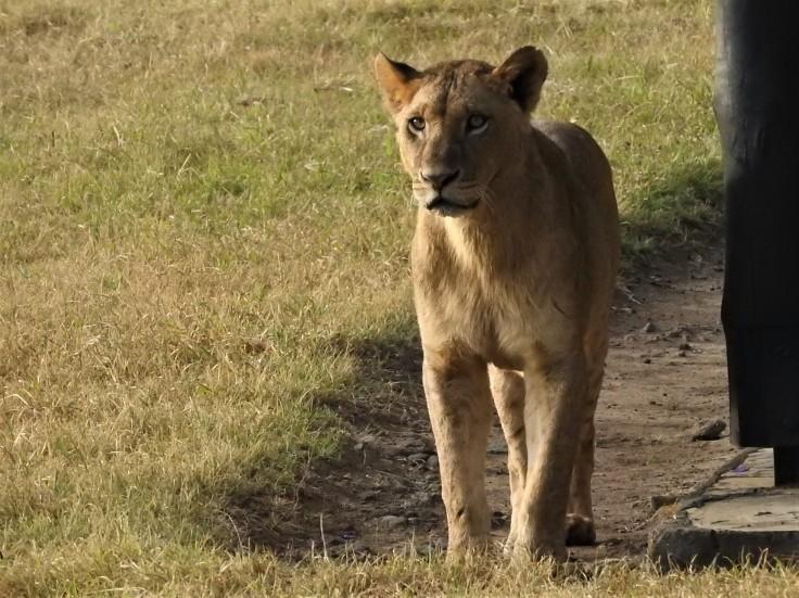 Kenya 2016 1006
