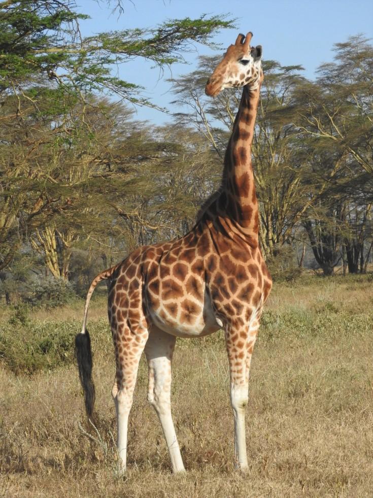Kenya 2016 1033