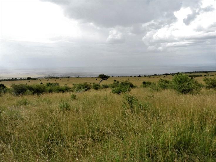 Kenya 2016 1205.JPG