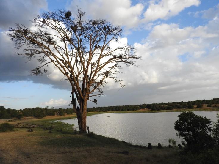 Kenya 2016 845.JPG