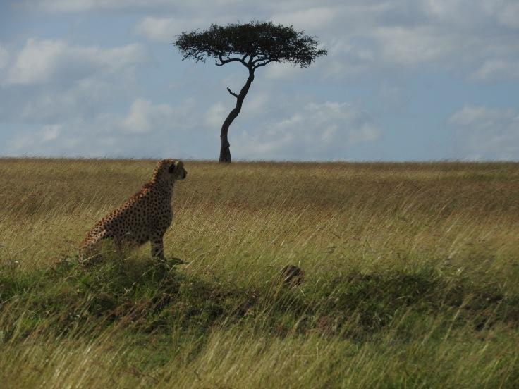 Kenya 2016 1658.JPG