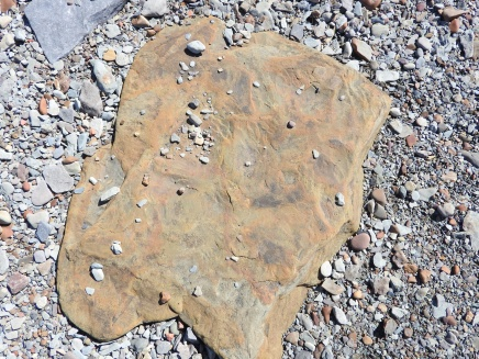 Fossils in the rocks on the beach