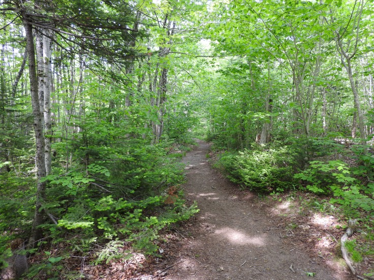 Jodrey Trail